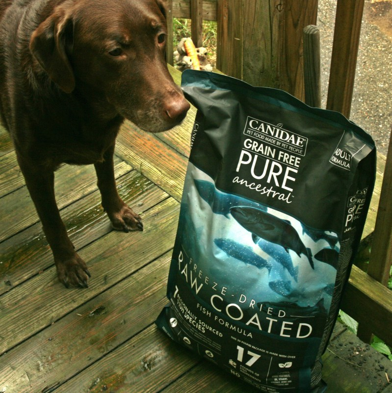 Chewy Influencer: 30 Day Canidae PURE Ancestral Raw Coated Kibble Challenge