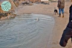 balto swimming