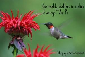 Ruby-throated Hummingbird (Archilochus colubris) - male
