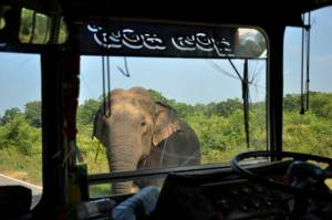 About Elephants and buses… from Kataragama to Arugam Bay