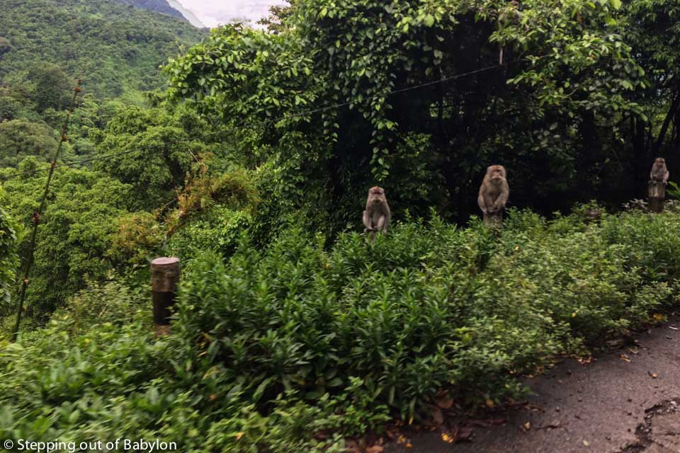 road from Mataram to Bangsal that pass by the Monkey forest where grey monkey wait for food on the road side