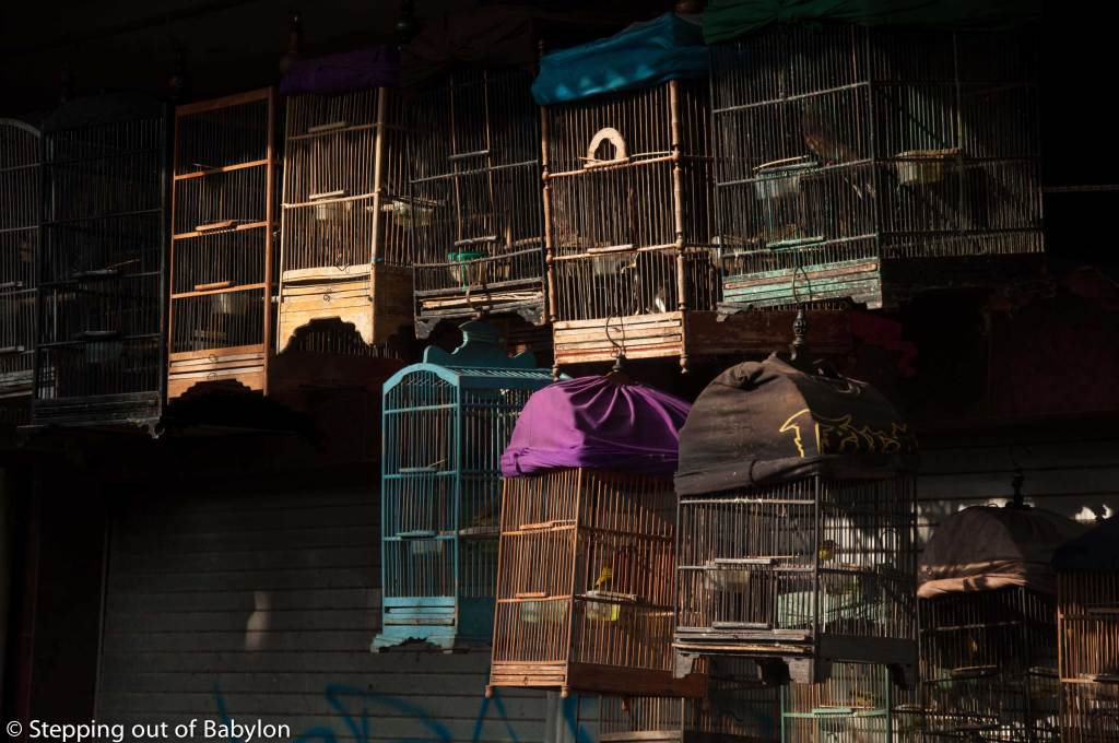 One of the markets in Malang is dedicated to the commerce of birds