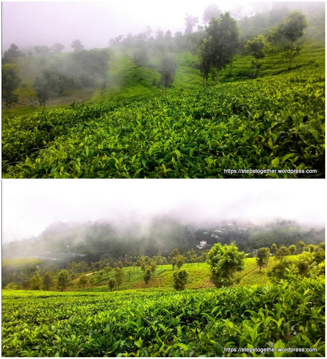 A Beautiful Tea Estate, Coonoor