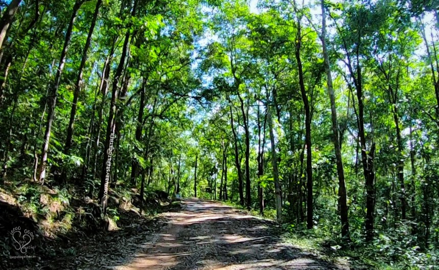 Magod Falls forest route