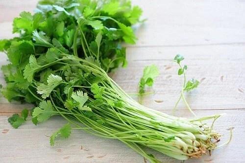 Image result for cilantro