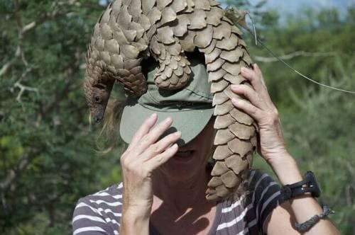 A woman holding a pangolin.