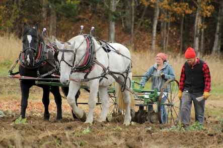 Draft-Horse-Management-4