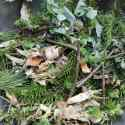 Collection of Foraged branches and leaves