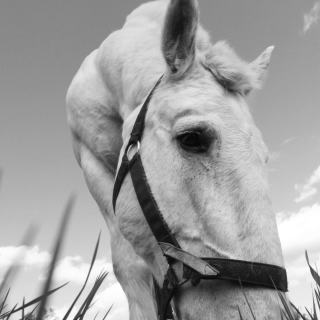 photo of a draft horse on a beautiful summer day