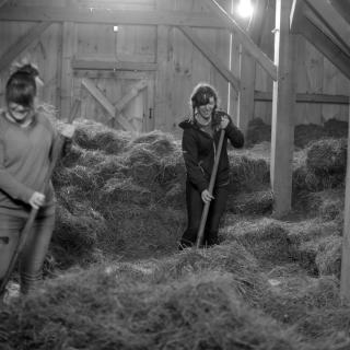 photo of students moving hay in the barn
