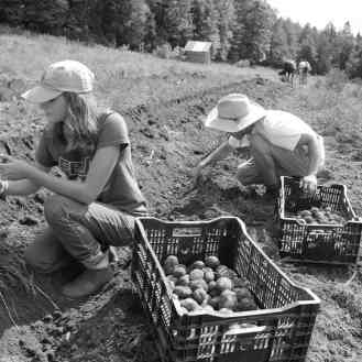 photo of students planting potatoes