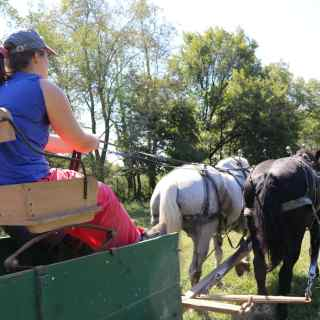 Driving Horses at the Wendell Berry Farming Program