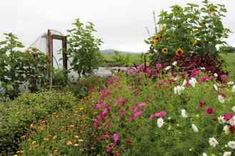 Flowers blooming in late summer on the Sterling College Farm