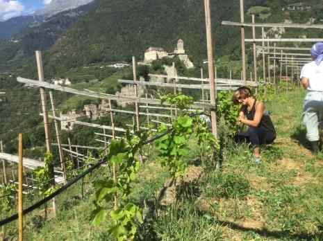 a woman crouching down to work on a vine in a vineyard
