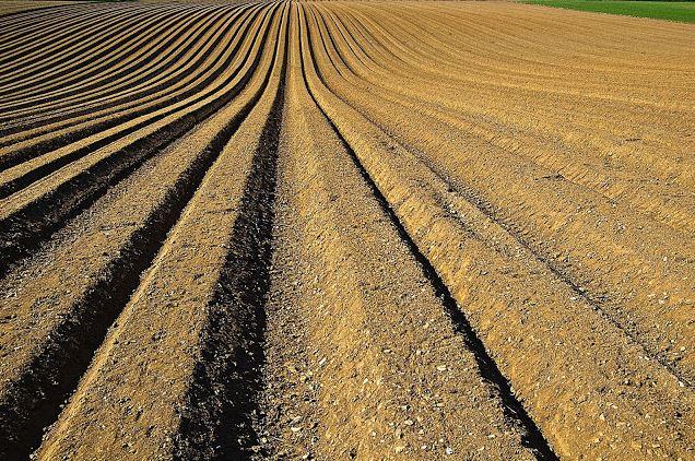 Cotton Marketing Strategy #4: Futures