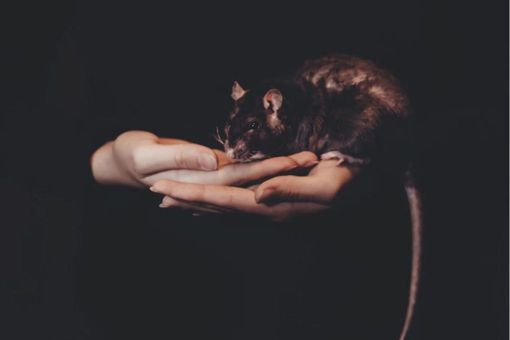 How Not Forgiving Others Is Like Rat Poison?