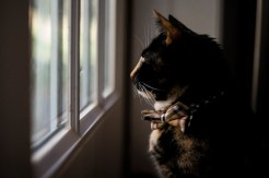 Cat by the Window 2