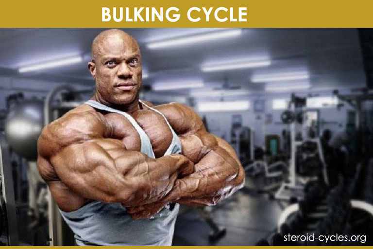 #1 Bulking Cycle: The Shocking Truth About Bulking Stack