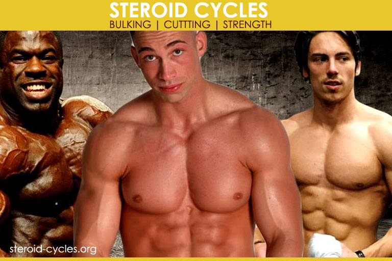 Steroid Cycles The Steroids Cycle For Bulking Cutting
