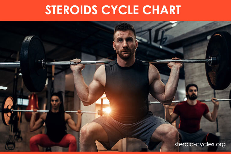 Steroids Cycle Chart: Best Legal Steroids Guide for Beginners! [2019]