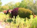 bisonti