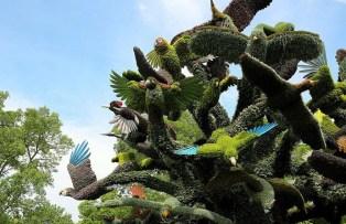 lalbero-degli-uccelli