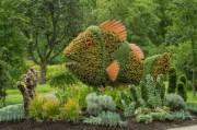 pesci-volanti