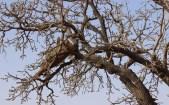 068-komnongo-karite-tree-in-flower-beehive-984x615
