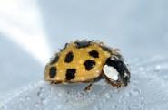 beetles-994211_960_720