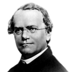 Gregor Johann Mendel -- The Father of Modern Genetics