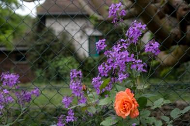Monet_09