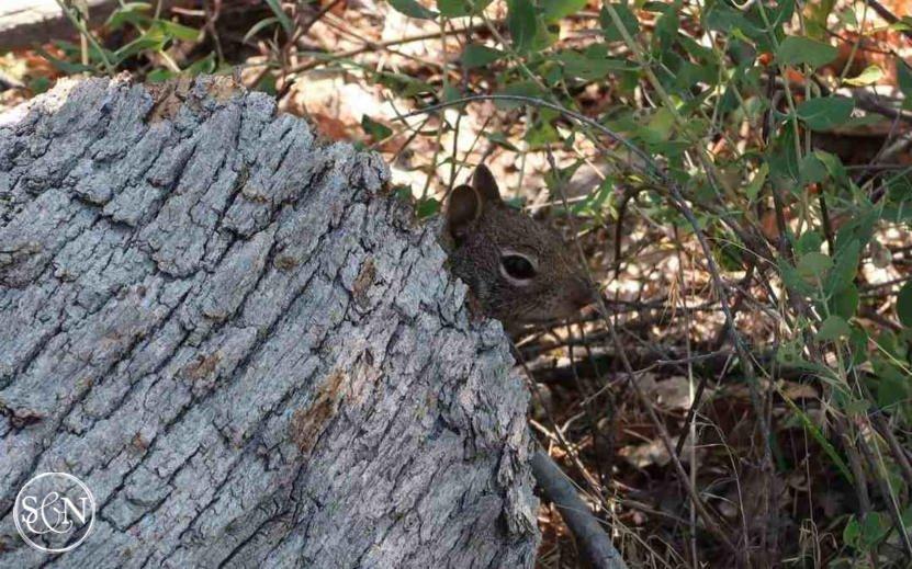 Tiny little chipmunk