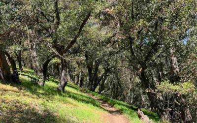 PCT: blog posts and you! June