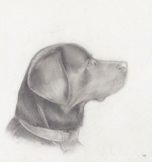 alucia-dog-pencil-portrait-steve-beadle-art