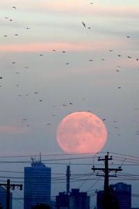 Moon rising over Edmonton