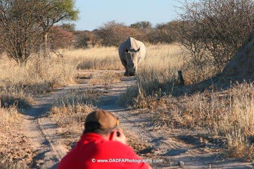 on phoot photographing Rhino, waterberg Namibia 2011
