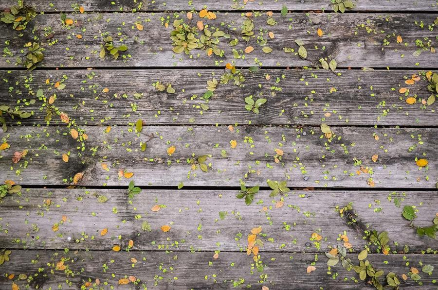 A wooden deck, sprinkled with flower petals and leaves