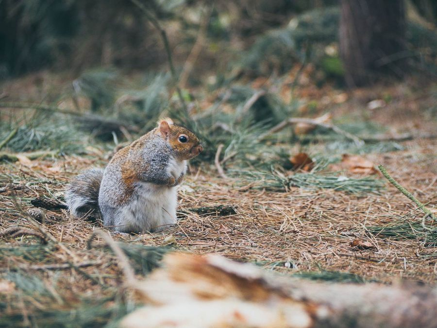 A squirrel perched on the forest floor