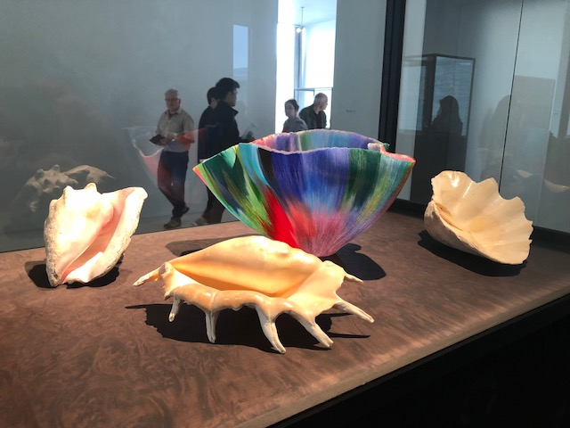 Display of 3 large shells with a beautiful multi-colored modern bowl, shaped somewhat like the cup of a flower