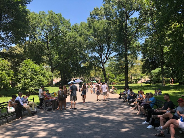 A wide sidewalk with lots of big trees all around, people filling park benches lined on either side