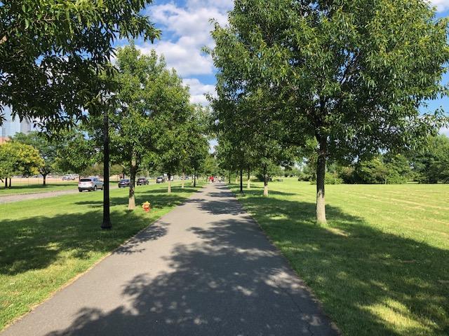 Long tree lined sidewalk, part 2