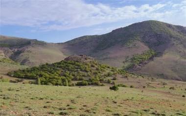 Oak woodland and hills behind