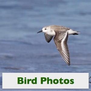 Bird-Photos_Sq