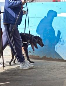 WIMBLEDON DOG TRIALS-6
