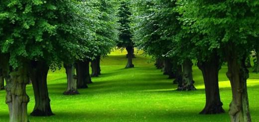 Trees Leaves