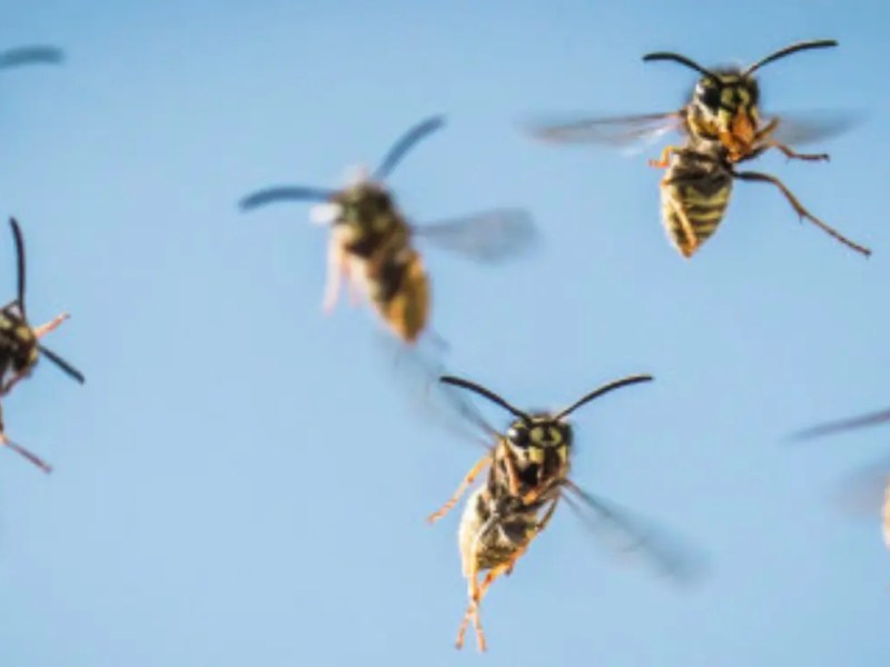 Dynamics 365 – Kicking the Hornets Nest