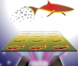 3D-printed microfish containing functional nanoparticles are capable of sensing and removing toxins (J. Warner, UC San Diego Jacobs School of Engineering)