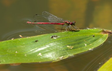 1_Andre_Riphagen_Dragonfly_Dining_Table