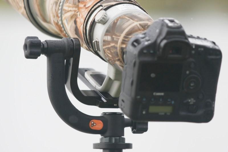 Gimbal Head - Jobu Junior 3 with 600mm and Canon 1dX mark II