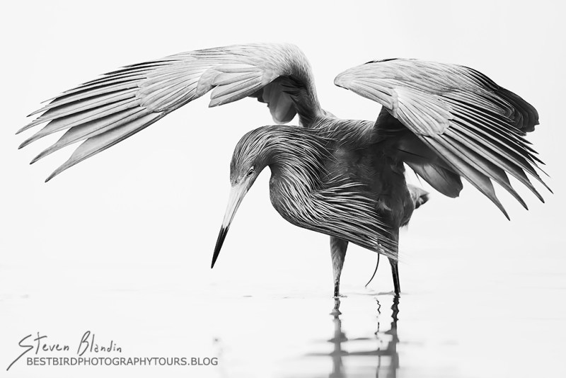 BBC Wildlife Photographer Of The Year - Final Round Bird Category